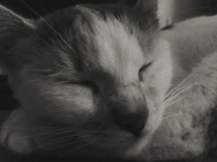 Kitty dreams Cat Eyes Closed  Sleeping Cat Black And White Dreaming EyeEmNewHere