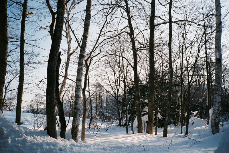 Tranquil winter scene with bare trees