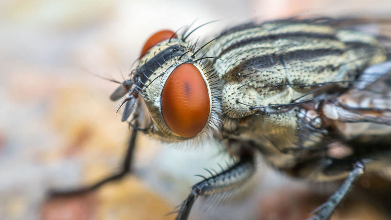 Animal Themes Animal Wildlife Animals In The Wild Close-up Damselfly Day Extreme Close-up Eyeball Housefly Insect Macro Nature No People One Animal Outdoors