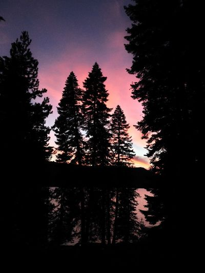 Sunset at Diamond Lake, Oregon Diamond Lake Fire In The Sky... Late Summer Colours Oregon Oregon Beauty Almost Night Beauty In Nature Dawn Of A New Day Dramatic Sunset Colors Dusk Forest Fur Tree Growth Landscape Nature No People Outdoors Scenics Silhouette Sky Sunset Tranquil Scene Tranquility Tree Winter