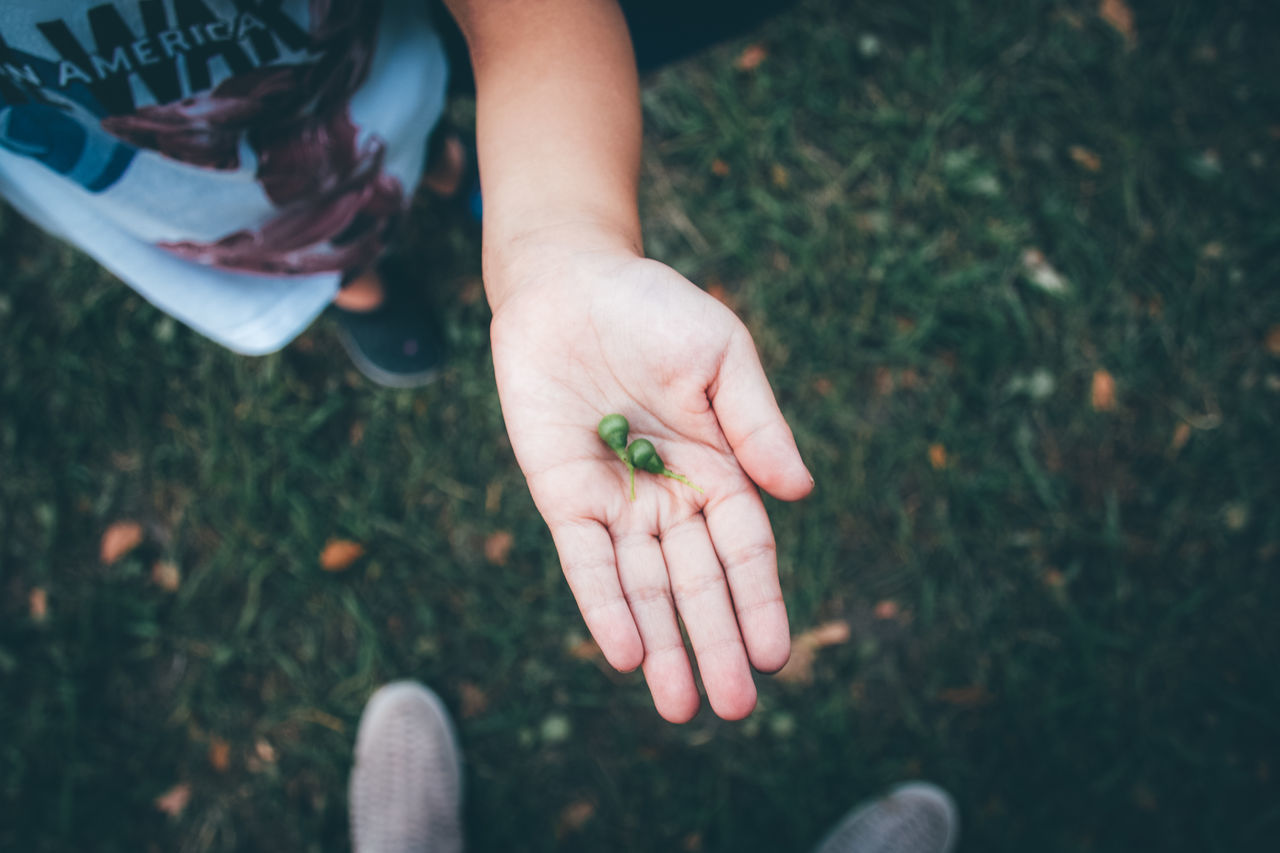 Cropped image of child holding buds at field