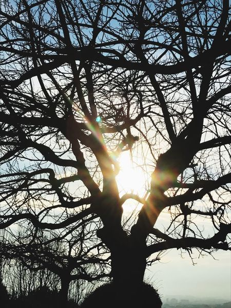 Nature Nature_collection Nature Photography Tree Winter Sunlight Sunset_collection Flair Tree And Sky Tree Silhouette Treescollection Trees And Nature Tree Branches Tree_collection  Sunset Silhouettes Sunset Sun Winter Trees Winter_collection Wintertime