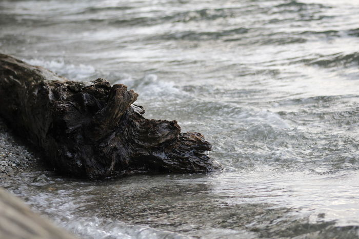 Tree Log Beauty In Nature Close-up Day Nature No People Outdoors Sea Water