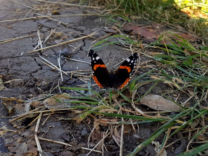 High angle view of butterfly on field
