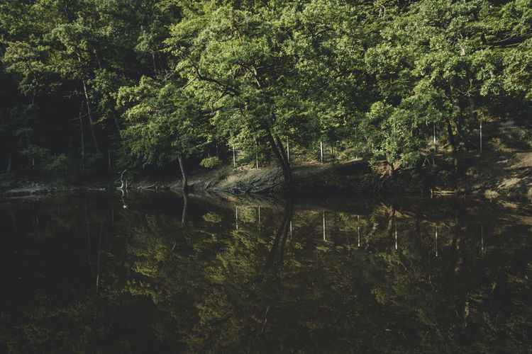 Beauty In Nature Branch Calm Dark Day Forest Green Color Growth Lush Foliage Nature Non-urban Scene Reflection Scenics Sovata Standing Water Stream Tranquil Scene Tranquility Tree Tree Trunk Water Water Surface Waterfront WoodLand Woods