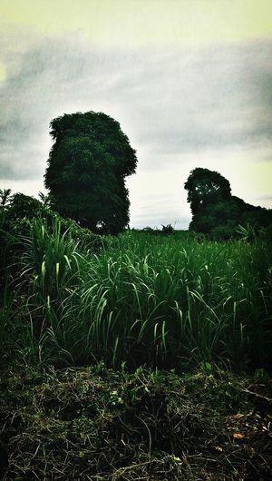 Green Horizon EyeAmRuralAmerica EyeEm Best Shots - Landscape