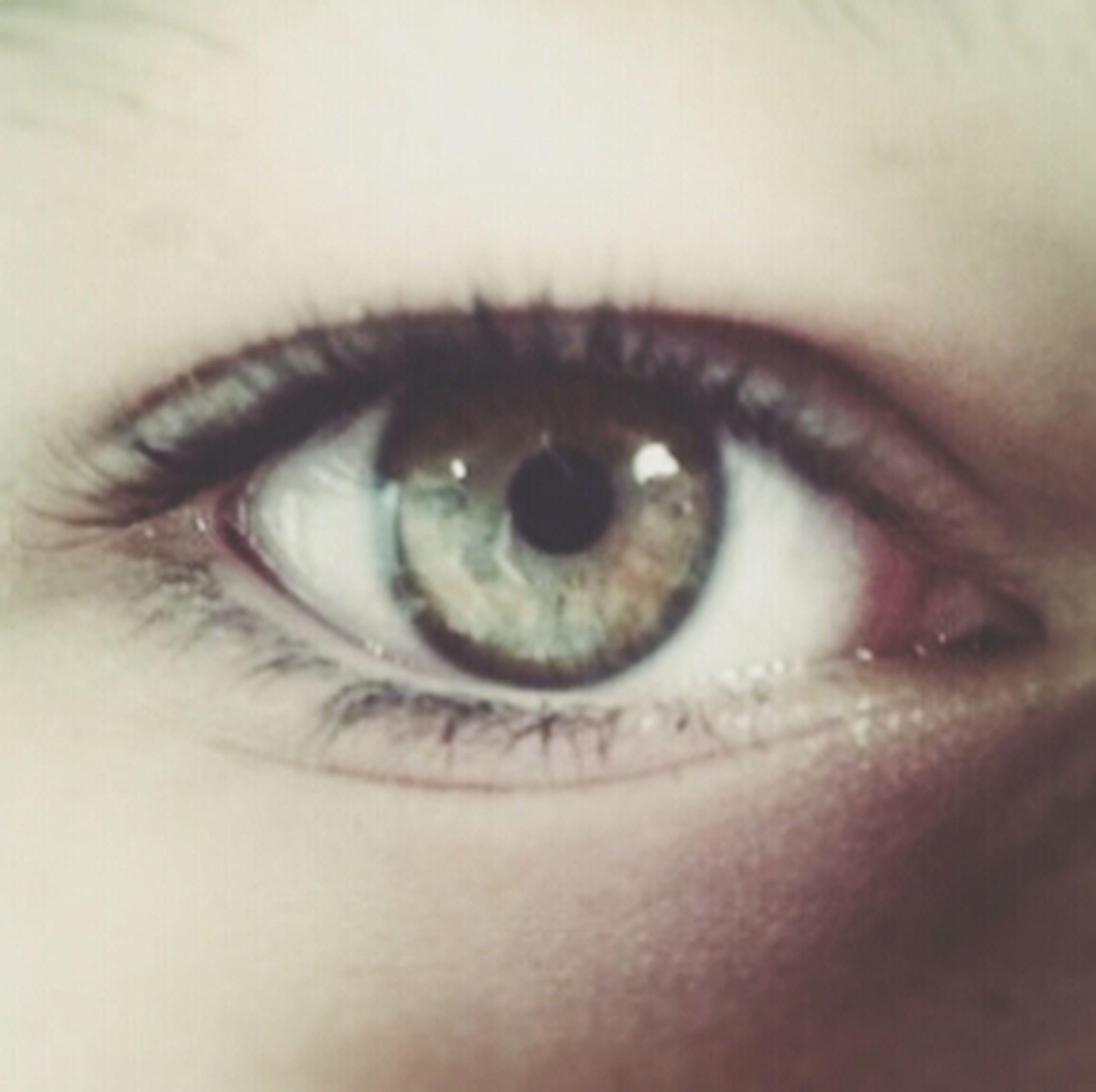 human eye, eyelash, close-up, eyesight, looking at camera, portrait, sensory perception, iris - eye, lifestyles, human face, eyeball, human skin, extreme close-up, part of, eyebrow, indoors, extreme close up