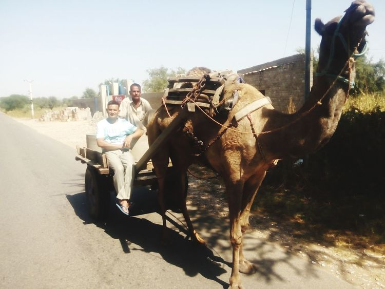Deserts Around The World Enjoying Life