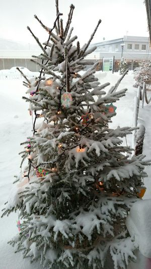 Eide På Nordmøre Norway Snow :) Christmas Tree