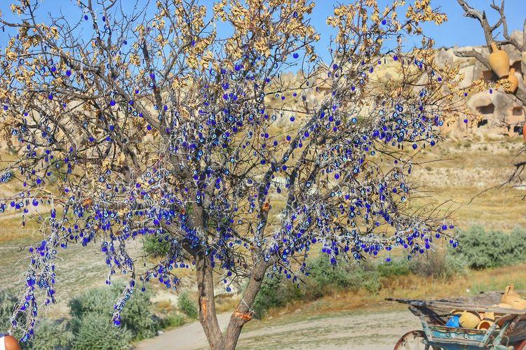 Dilek Ağacı Capadoccia Turkey Nevşehir Göreme Tree Art Wishes Wish Tree