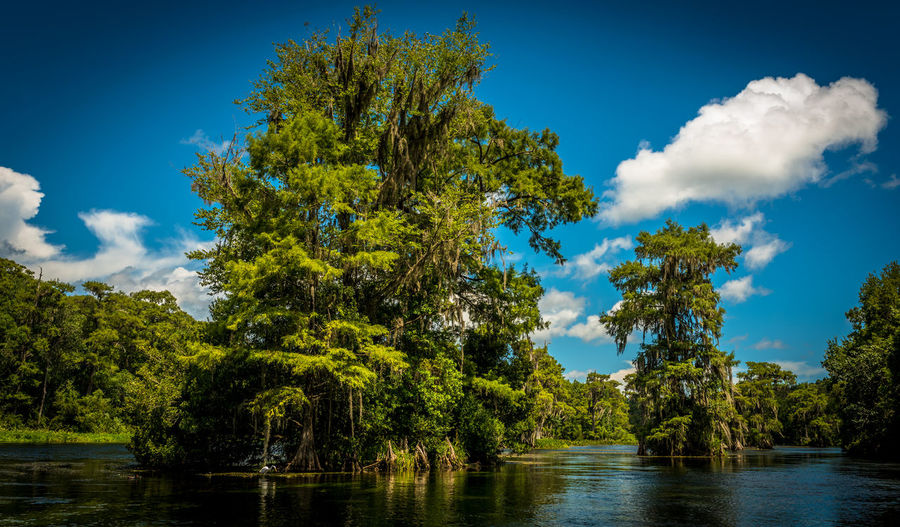 Sunny Swamp Day Florida Nature No People Outdoors River Sunny Day Swamp Wakulla River Wakulla State Park Water Wetlands The Great Outdoors - 2017 EyeEm Awards