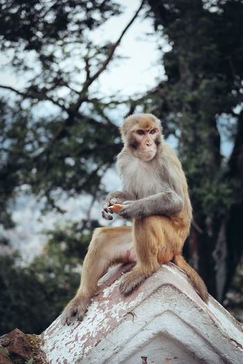 Monkey Sitting On Built Structure Against Trees