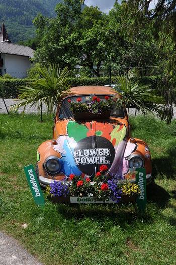Auto Mit Blumen Blumenauto Day Flowers Grass No People Outdoors Transportation