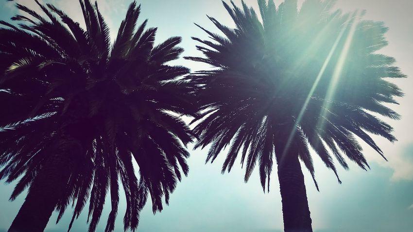 Tirados en la arena del mar ... Sintiendo la brisa de las olas... Palm Tree Beauty In Nature Day Low Angle View