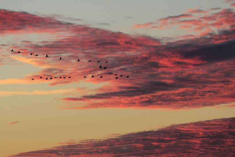 Birds flying in sky at sunset
