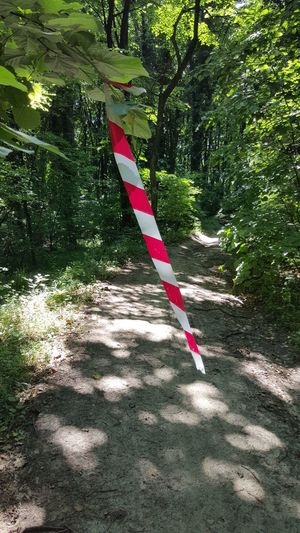 Fruška Gora Forrest White Red Stripes Red White Stripes Green Green Leaves Trail Forrest Trail Trees