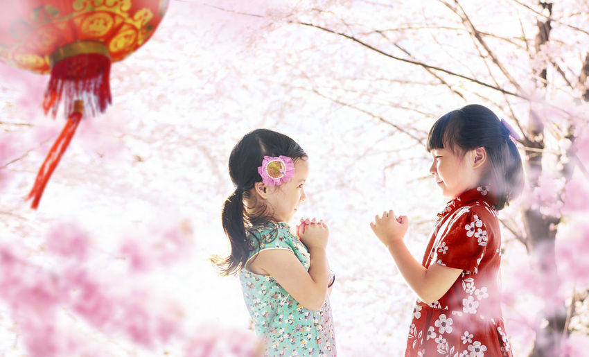 Two adorable girl wearing cheongsam during chinese new year season . China Lunar Asian  Cherry Blossoms Red Adorable Asian Girl Celebrate Cheongsam Childhood Chinese Chinese New Year Culture Festival Greetings Malaysian Oriental Spring Traditional