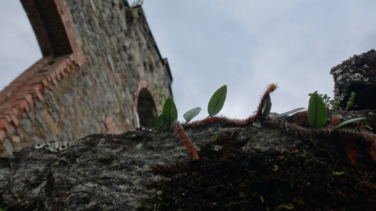 growth, no people, nature, plant, low angle view, sky, outdoors, day, architecture, close-up, beauty in nature