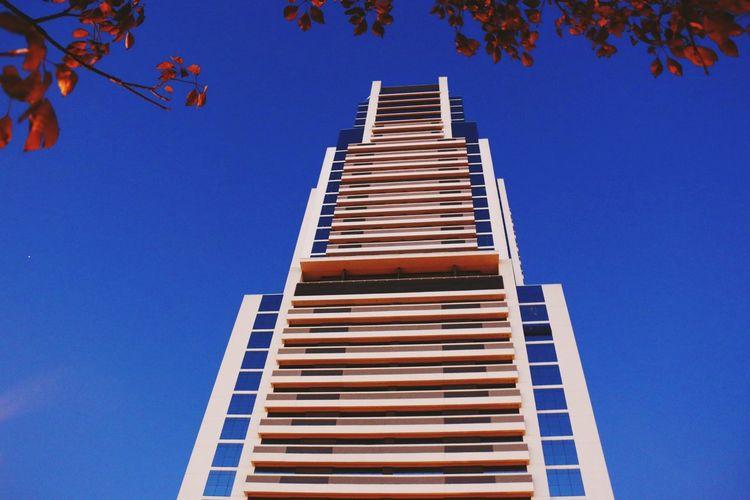 The Architect - 2016 EyeEm AwardsSkyscraper Building Leaves Height Sky Window Blue Arranhaceu Prédio  Folhas Ventana Blau Fenster Bleu Altura Céu Janela Azul Gebäude Hoch Cielo