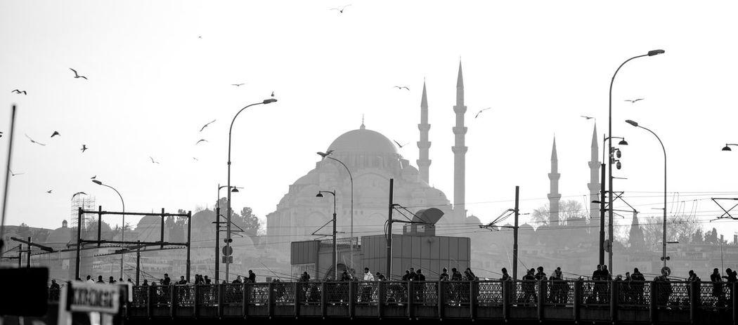 Best  Bestoftheday Bird EyeEm EyeEm Best Edits EyeEm Best Shots EyeEm Best Shots - Black + White EyeEm Best Shots - Nature EyeEm Gallery EyeEm Masterclass EyeEm Nature Lover EyeEmBestPics Eyeemistanbul EyeEmNewHere Eyeemphotography First Eyeem Photo FirstEyeEmPic Galata Hagiasophia  Istanbul Istanbul Turkey Sultanahmet ıstanbul