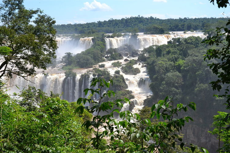 foz de iguacu Adventure Beauty In Nature Day Forest Foz De Iguacu Growth Motion Nature No People Outdoors Scenics Sky Tree Water Waterfall