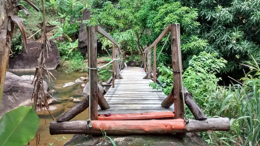 Bridge Nature Peace