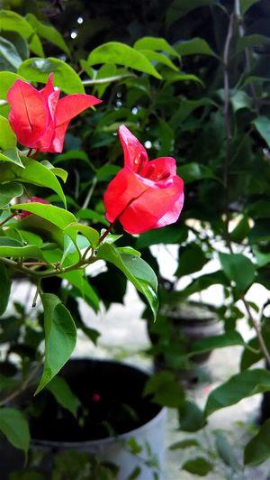Macro_flower Macro Nature Macro Photography Macro Flower