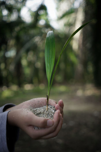 A New Hope A New Life Adult Adults Only Agriculture Close-up Day Focus On Foreground Green Color Growth Holding Human Body Part Human Hand Nature One Person One Woman Only Outdoors Palm Palm Tree People Real People Tree