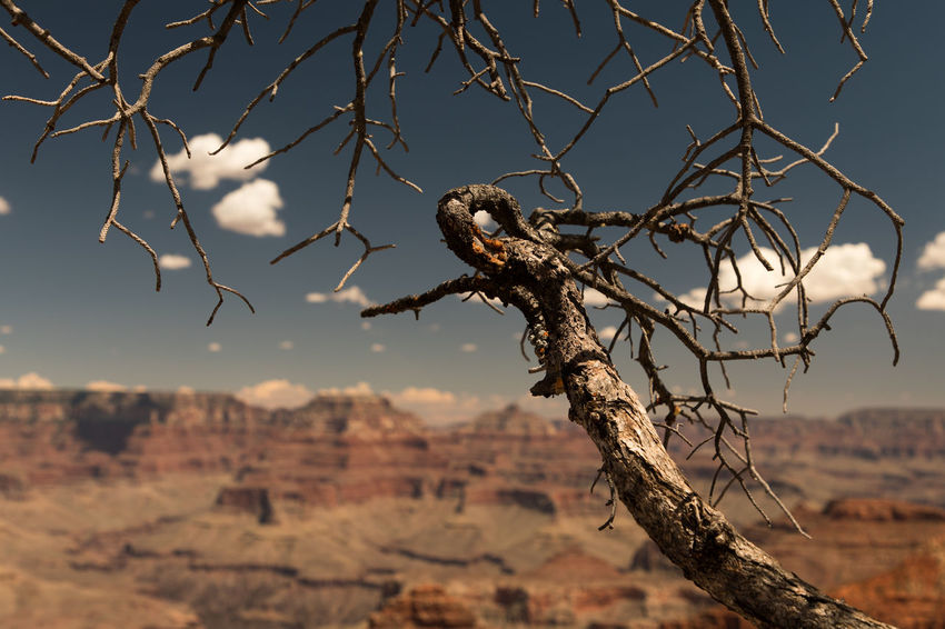 dead tree Arid Climate Beauty In Nature Branch Close-up Day Dead Plant Dead Tree Dried Plant Focus On Foreground Nature No People Outdoors Sky Tree