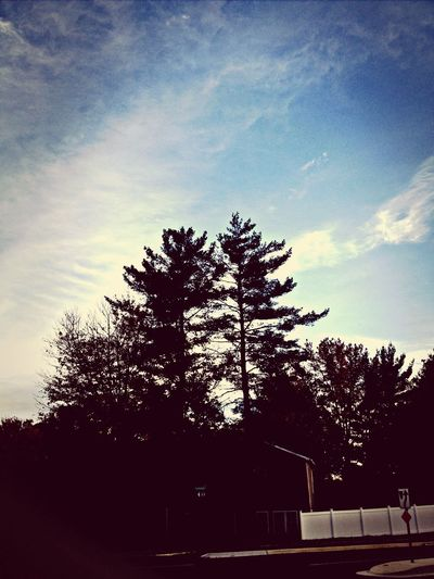 Theskyaboveus Pinetrees Outside United States ????⛅️