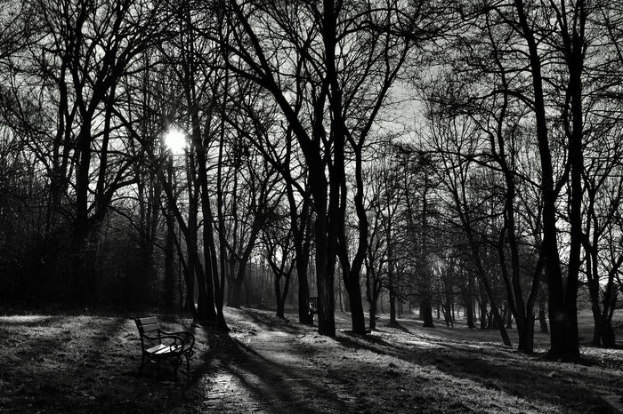 Black and white nature in the winter Winter Bare Tree Beauty In Nature Black And White Black And White Nature Photographs Black And White Nature Photography Black And White Photography Branch Cold Temperature Day Forest Landscape Nature No People Outdoors Scenics Tranquil Scene Tranquility Tree Winter