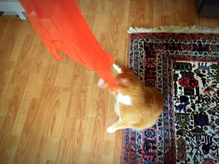 Silk Scarf Motion Playing Cat EmNewHere 3XPSUnity Orange Color The Cat Condition Cats Of EyeEm Cat Love It Silkscarf High Angle View Cat Toy Pets Cat Collection Cat Posing Cat Posing For Me