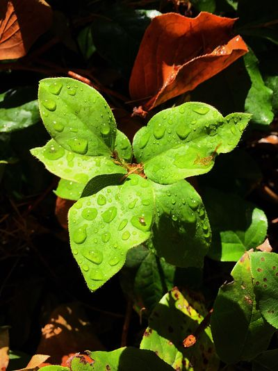 Plant Part Leaf Growth Plant Green Color Close-up Nature Beauty In Nature Outdoors Botany Water