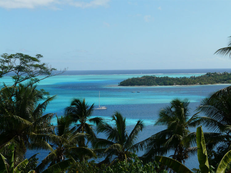 fakarava Beach Beauty In Nature Blue Clear Sky Day Growth Horizon Over Water Idyllic Nature No People Outdoors Palm Tree Plant Scenics Sea Sky Tranquil Scene Tranquility Tree Water