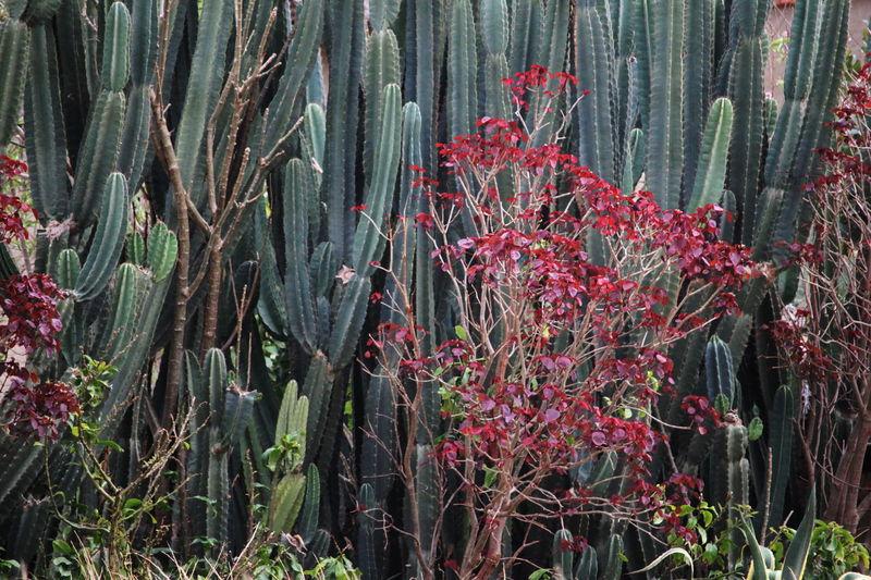 Bushes Cactus