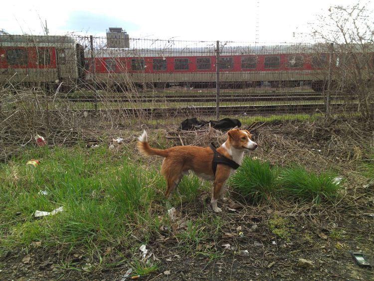 Streetphotography Yard Rails Train Warschauerbrücke Hund Dog