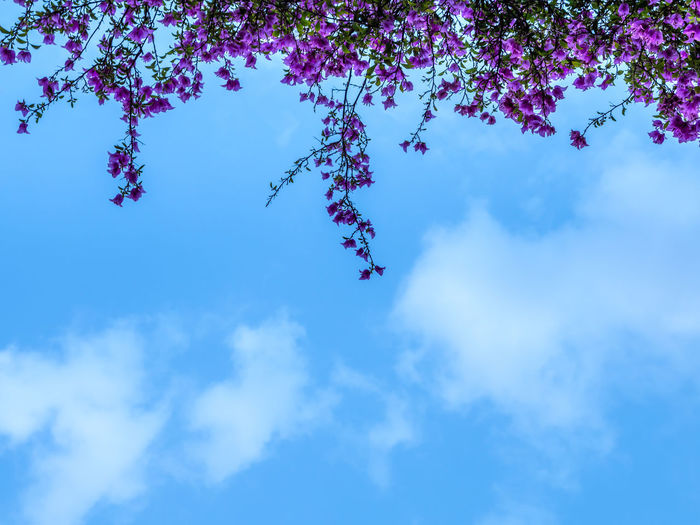 Emotion blurred of cloud in summer, defocused in subject. Abstract blurry background of cloudy in day time. A beautiful in nature of cloud and sky. Silhouette image top of tree, tree parts.