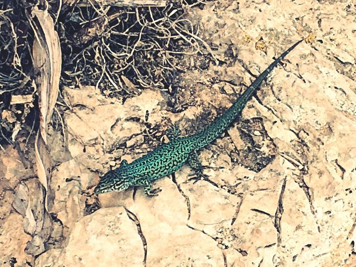 Reptiles Reptile Animals Nature Nature_collection EyeEm Nature Lover Fauna Walking Around Enjoying Nature Taking Photos