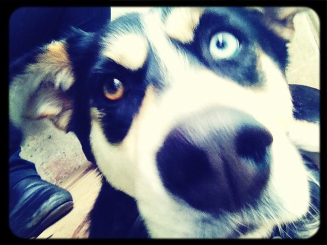 Mydogiscoolerthanyourkids Doglovers Mydog Puppy❤ le amo ?