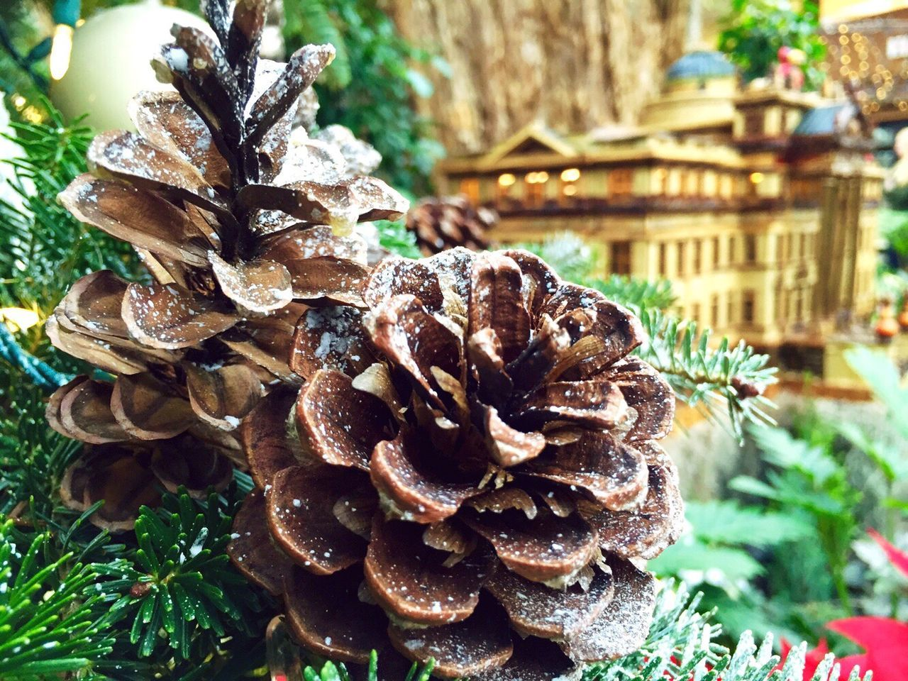 Close-Up Of Pine Cones During Christmas