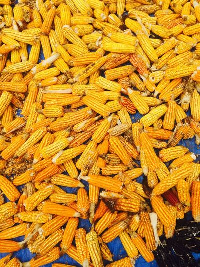 Corn Food Colors Colorful