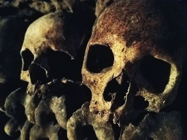 Skulls inside the Paris Catacombs Human Skull Human SkeletonUnidentifiable People Traveling Bones Bone  Skulls Gothic Gruesome Horror Historic Underground Museum  Focus On Foreground Lifestyles Built Structure Human Body Part Close-up Spooky Indoors  Catacombs Catacombs Of Paris Europe Death Skulls And Bones Face
