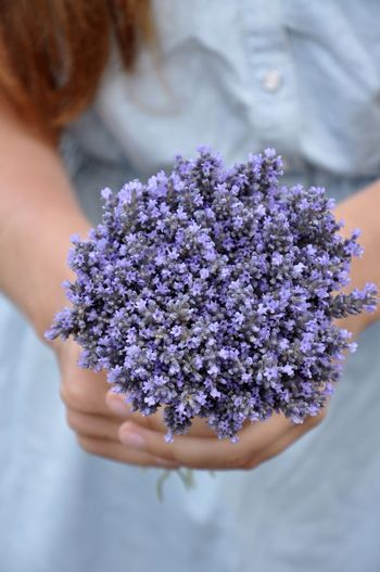 High angle view of hands holding lavender flower