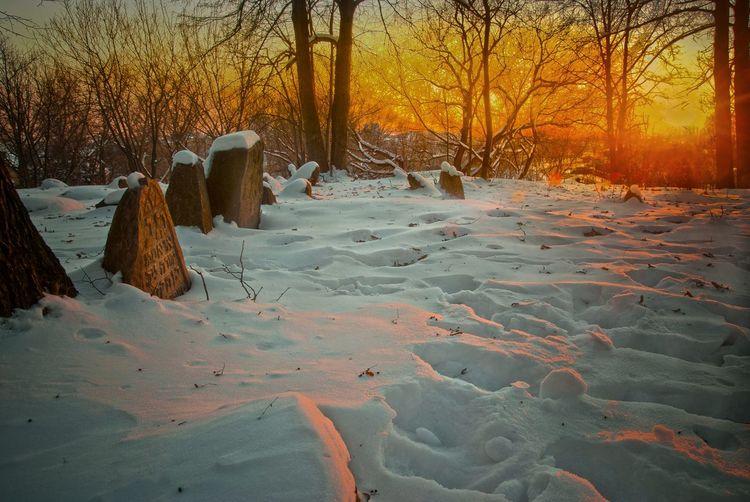 Cemetery Matzeva Bare Tree Beauty In Nature Cold Temperature Landscape Nature Scenics Snow Tranquil Scene Tranquility Tree Winter