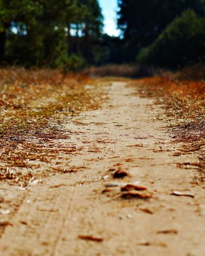 Long Way EyeEmNewHere Forest Tree Nature Outdoors No People Road Day Landscape Close-up