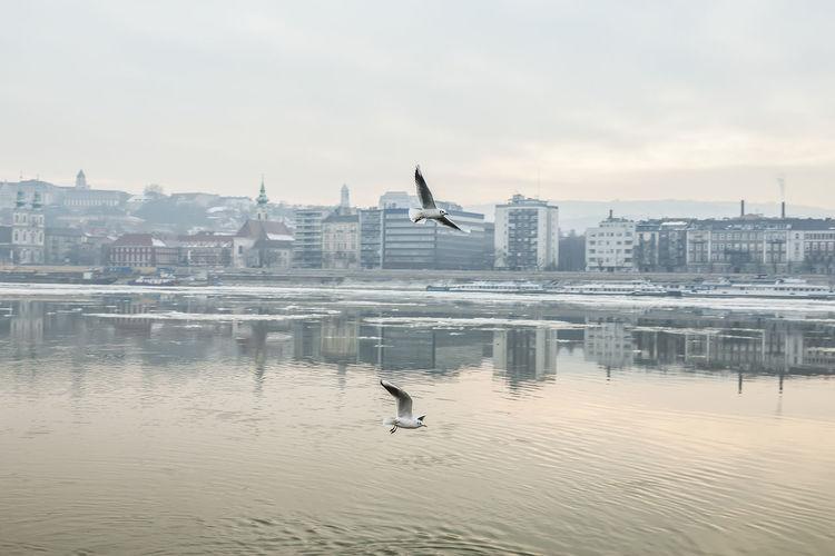 Birds perching on city against sky