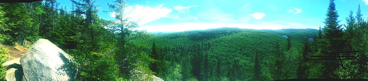 May the forest be with you ✨🙌🏼🌲 Outofsight Hikingview Rock Greenmountains Landscape_Collection Wilderness Sky Green Color Day Nature No People Growth Tree Tranquility Beauty In Nature Outdoors Landscape Tranquil Scene Environment Scenics - Nature