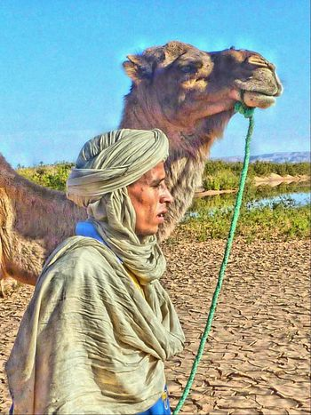 Camel HDR Taking Photos Morocco
