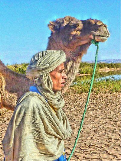 Camel HDR Taking Photos Morocco