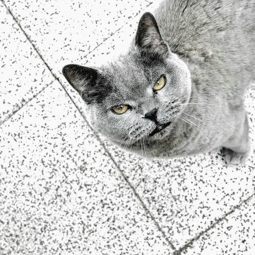 Close-up portrait of black cat on floor